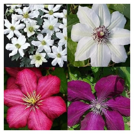 Rood - Wit Clematis mix
