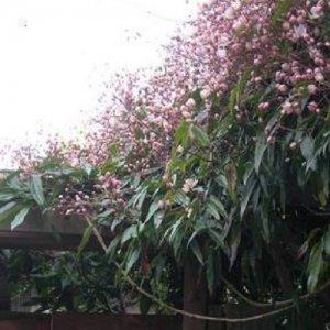 Klimplanten haag groenblijvend zonder Hedera (5 meter)