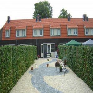 Klimop/Hedera Haag: 6...